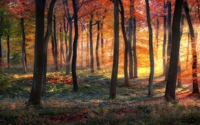 Картинка лес, деревья, краски осени