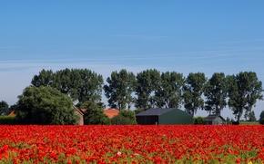 Картинка поле, лето, пейзаж, цветы, природа