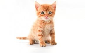 Картинка взгляд, котенок, мило