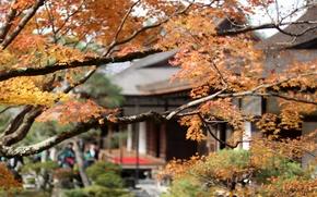 Картинка клен, дом, осень, Япония