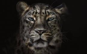 Картинка морда, фон, черный, леопард