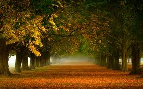 Картинка деревья, природа, туман, листва, оранжевая, Осень, дорожка, аллея, желтая, золотая