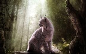 Картинка лес, кошка, свет, хищник, рысь, дикая