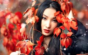 Картинка листья, снег, макияж, Alessandro Di Cicco, Huan