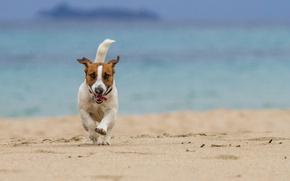 Картинка море, пляж, собака, бег