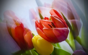 Обои цветы, тюльпаны, букет