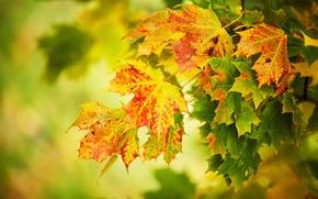 Картинка осень, листья, макро, жёлтые