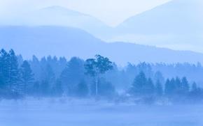 Картинка деревья, горы, природа, туман, дымка