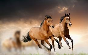 Картинка трава, облака, лошади, бег