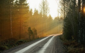 Картинка дорога, лес, природа, туман, утро