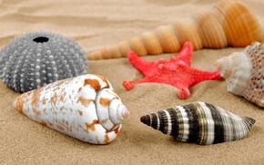 Картинка песок, пляж, ракушки, sand, starfish, seashells