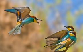 Картинка птицы, измена, соперник