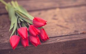 Картинка цветы, фон, widescreen, обои, розы, wallpaper, розовые, rose, цветочки, flower, широкоформатные, background, полноэкранные, HD wallpapers, …