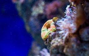 Картинка Море, океан, кораллы, губка, цвет