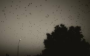 Картинка птицы, природа, вечер