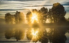 Картинка солнце, деревья, природа, туман, река