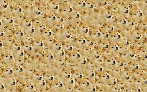 Картинка Собака, Dog, Текстура, Texture, Doge