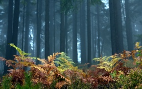Обои лес, деревья, пейзаж, природа, папоротник