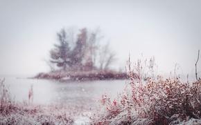 Картинка осень, снег, природа