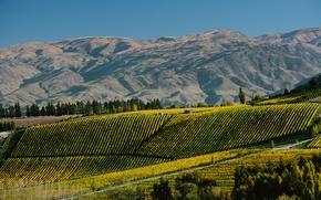 Картинка деревья, горы, поля, Новая Зеландия, плантации, Burn Cottage Vineyard