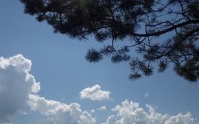 Картинка зелень, лес, лето, небо, облака, ель