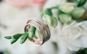 Картинка цветы, праздник, кольца, свадьба