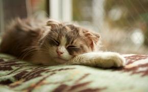 Картинка кошка, сон, окно, спит, одеяло