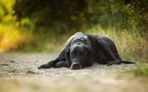 Картинка песок, отдых, собака
