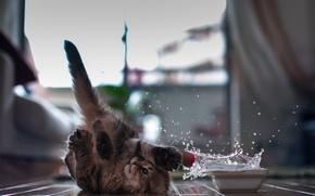 Обои кошка, oops, © Ben Torode, Daisy, бумсь, брызги