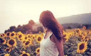 Картинка поле, подсолнухи, поза, Девушка