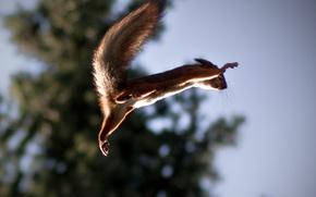 Картинка прыжок, белка, полёт, Squirrel