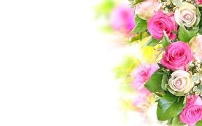 Обои цветы, букет, красивые, розовые, белые, розы, цветок