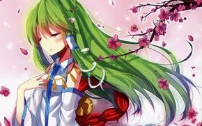 Картинка ветка, лепестки, сакура, зеленые волосы, змейка, art, touhou projeck, kazucha, Sanae Kochiya