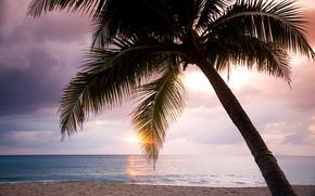 Картинка море, небо, облака, закат, пальма