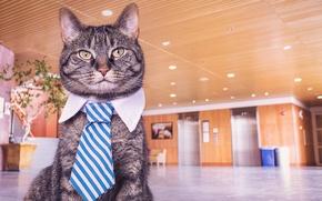 Картинка кот, cat, cat face, кот в галстуке