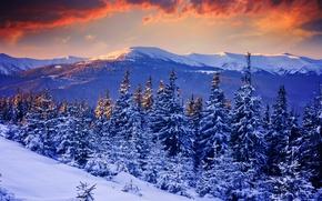 Картинка зима, лес, небо, снег, деревья, закат, горы, природа