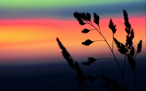 Обои трава, Цвет