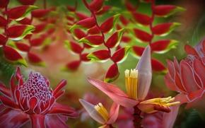 Картинка цветы, розовые, бутоны, листики, веточки