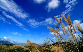 Картинка небо, трава, облака, макро, растение