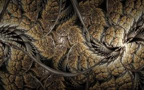 Обои фрактал, абстракция, линии, fractal, curves
