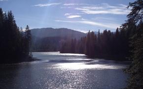 Картинка лес, река, утро