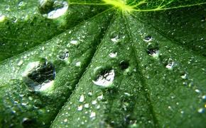 Картинка капли, лист, зеленый