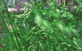 Картинка зелень, лето, трава, природа, зеленый, растение, сочно