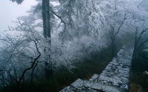 Обои дорога, лесенка, зима