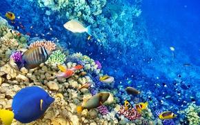 Картинка рыбки, океан, world, подводный мир, underwater, ocean, fishes, tropical, reef, coral, коралловый риф
