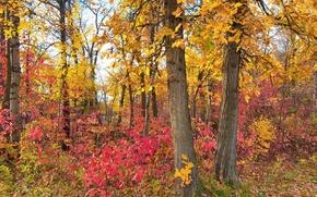 Обои парк, лес, деревья, осень, листья, багрянец