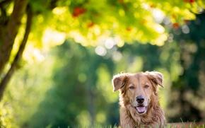 Картинка нос, уши, пёс, барбос