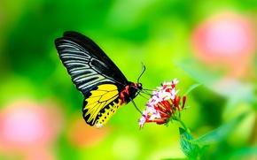 Обои цветок, листья, бабочка, Макро, крылья