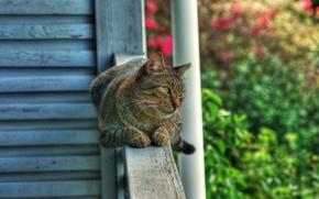 Картинка кошка, кот, сад, перила, лежит, смотрит, зеленоглазый, наблюдатель, обои от lolita777