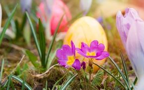 Картинка трава, цветы, природа, праздник, яйца, весна, Пасха, крашенки